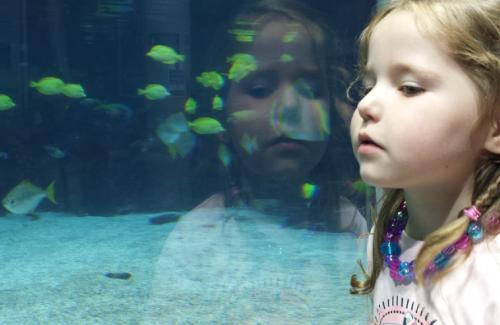 Educació ambiental en el medi marí