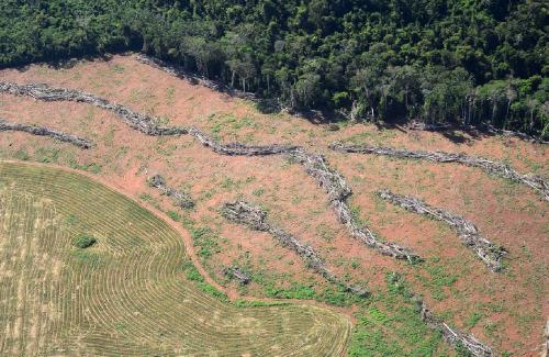 Selvas amenazadas: causas y consecuencias globales