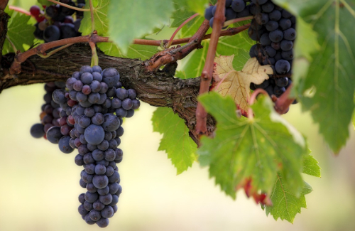 La volta al món del vi en cinc tardes