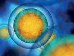 Células madre: de la investigación a la clínica