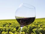 La Catalunya vitivinícola