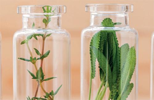 Les plantes i la salut